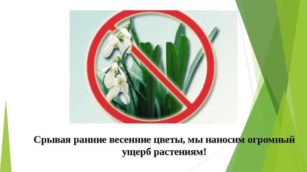 Минприроды Крыма осуществляется проведение надзорных мероприятий по выявлению таких нарушений как уничтожение и оборот краснокнижных растений