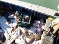 Керченский городской суд арестовал четырёх украинских браконьеров