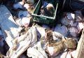 Керченский городской суд арестовал украинских браконьеров
