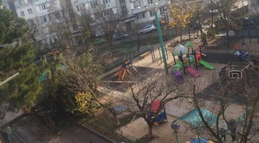 Упавшим деревом из публикации ForPost занялась прокуратура Севастополя