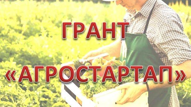 Объявлен прием документов на предоставление грантов «Агростартап»