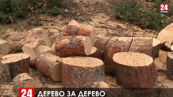В Большой Ялте средства за срубленные деревья направят на высадку новых