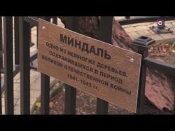 Мемориальный час «Миндаль огненных лет» провели в Севастополе (СЮЖЕТ)