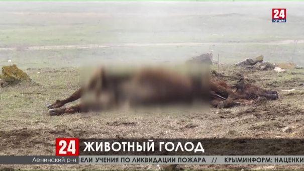В Ленинском районе на частном фермерском хозяйстве скончались 40 коров