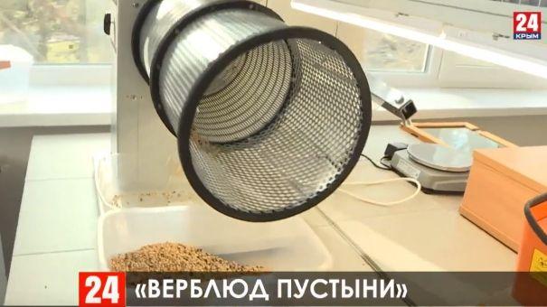 Крымские учёные вывели 15 сортов культур, устойчивых к засухе
