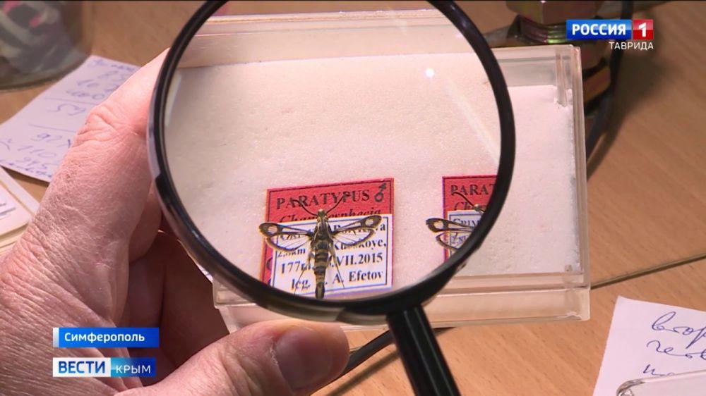 Не то бабочка, не то оса: уникальное насекомое назвали в честь крымского ученого