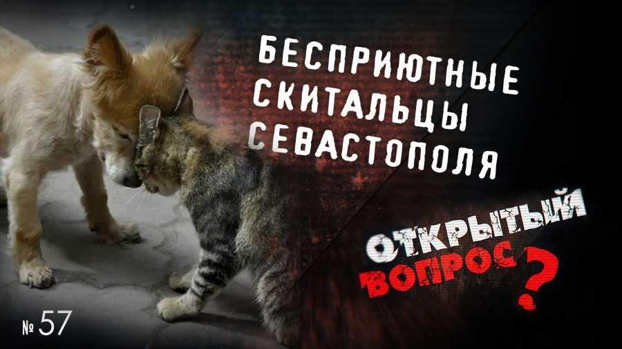 Открытый вопрос. Кто готов спустить всех собак к правительству Севастополя?