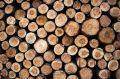В Симферополе незаконно вырубили 1650 деревьев