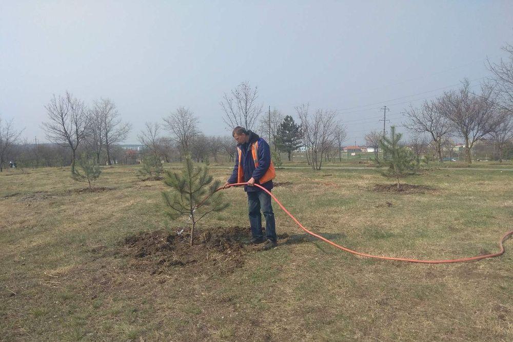 «Сад Памяти» в Симферополе лишился пяти пихт — украли неизвестные