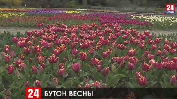 В Никитском ботаническом саду пройдёт виртуальный парад тюльпанов