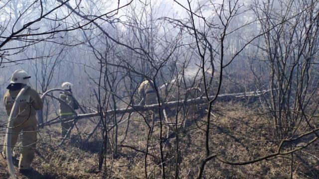 Утром под Феодосией загорелся лес