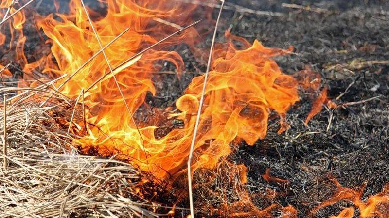 Внимание! Соблюдайте правила пожарной безопасности в лесах