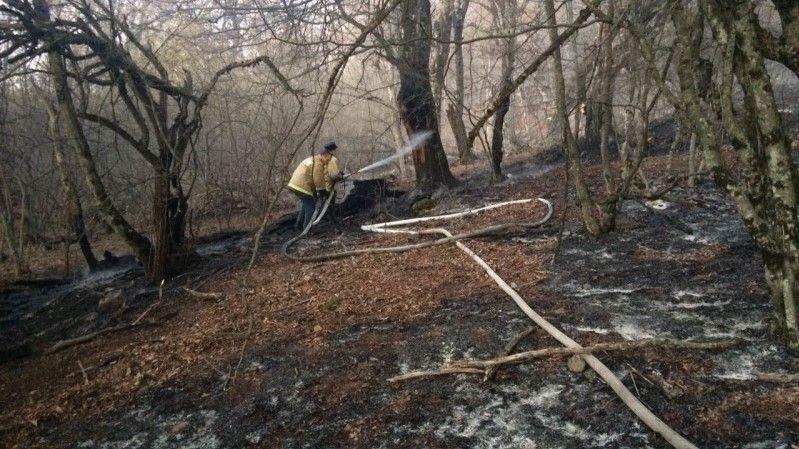 В Бахчисарайском районе потушен лесной пожар