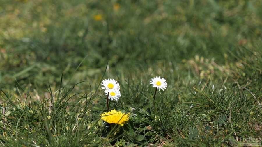 Вопреки коронавирусу в Севастополь приходит весна