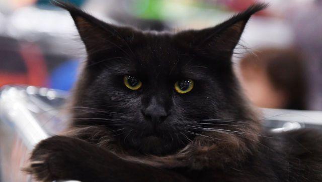 В Феодосии ищут женщину с котом, ехавшую в такси с больными COVID-19