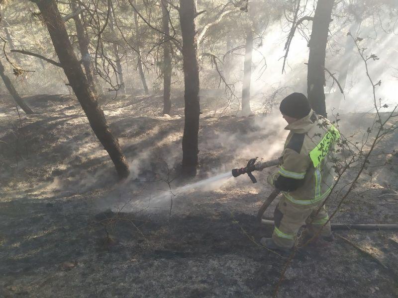 В Симферопольском районе горел лес