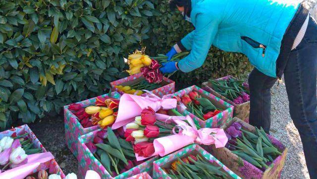 В Крыму тюльпаны из ботанического сада срезают в подарок врачам