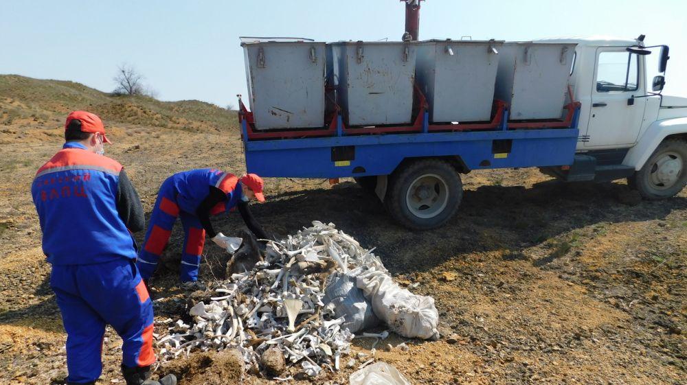 Еще один скотомогильник обнаружен в заброшенном карьере Сакского района