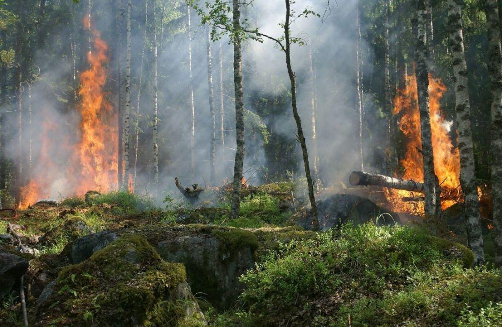 В Крыму объявлено экстренное предупреждение о высокой пожарной опасности