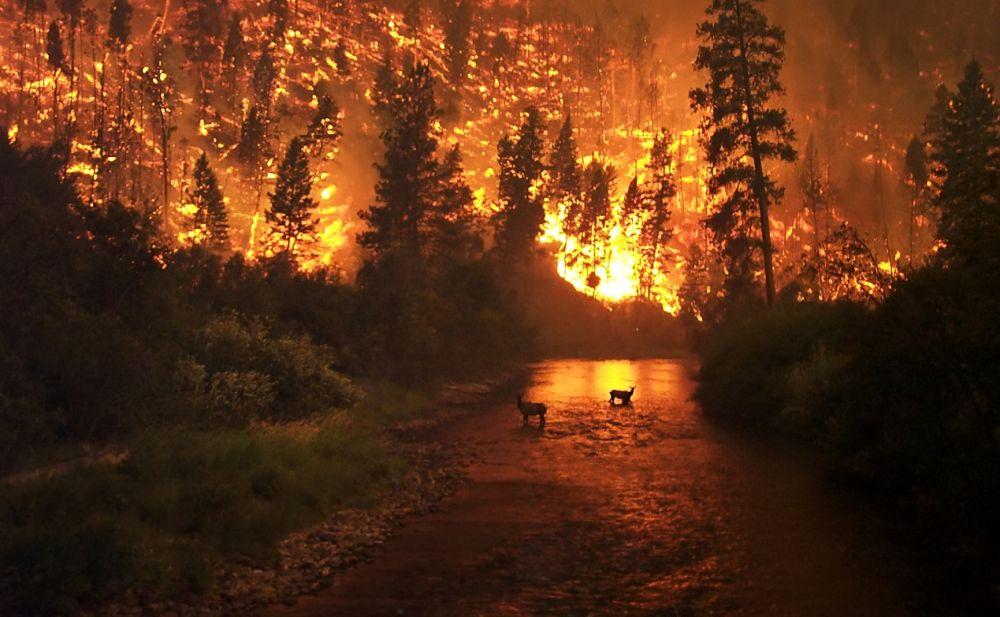 Число лесных пожаров в Крыму возросло на 600%