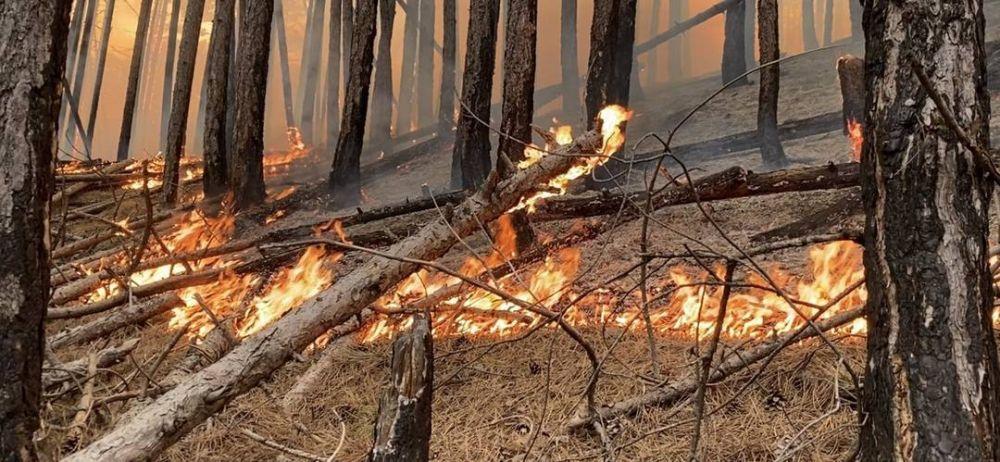 157 населенных пунктов Крыма вошли с перечень подверженных угрозе лесных пожаров