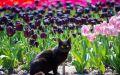 Парад тюльпанов-2020 в Никитском ботаническом проходит без зрителей, но шоу фееричное