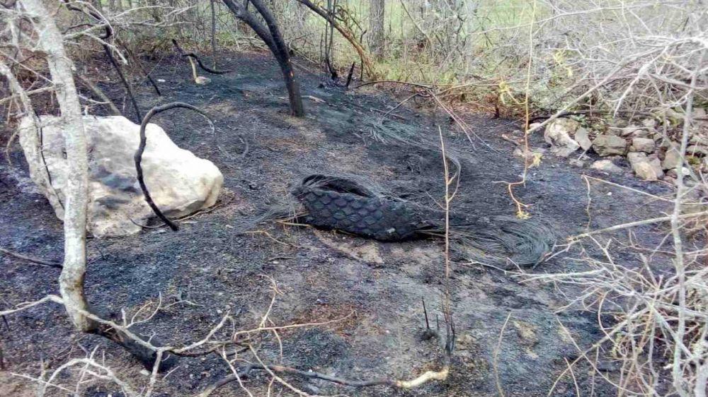 За прошедшие выходные сотрудники ГАУ РК «Алуштинское лесное хозяйство» ликвидировали 4 возгорания