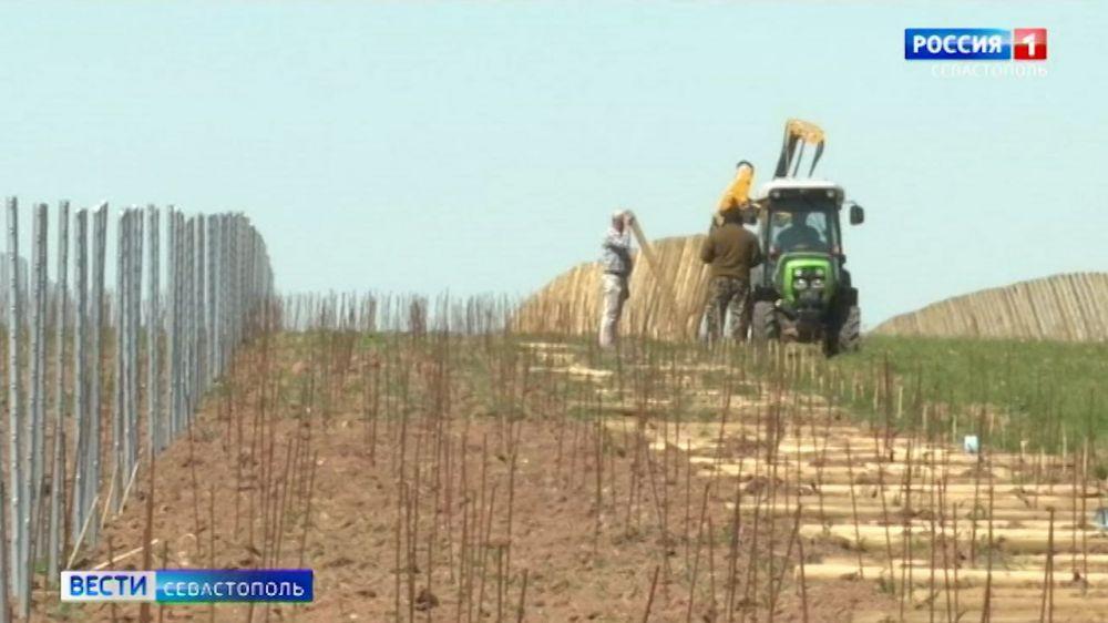 Аграриям Севастополя могут компенсировать до 80% затрат на закладку виноградников