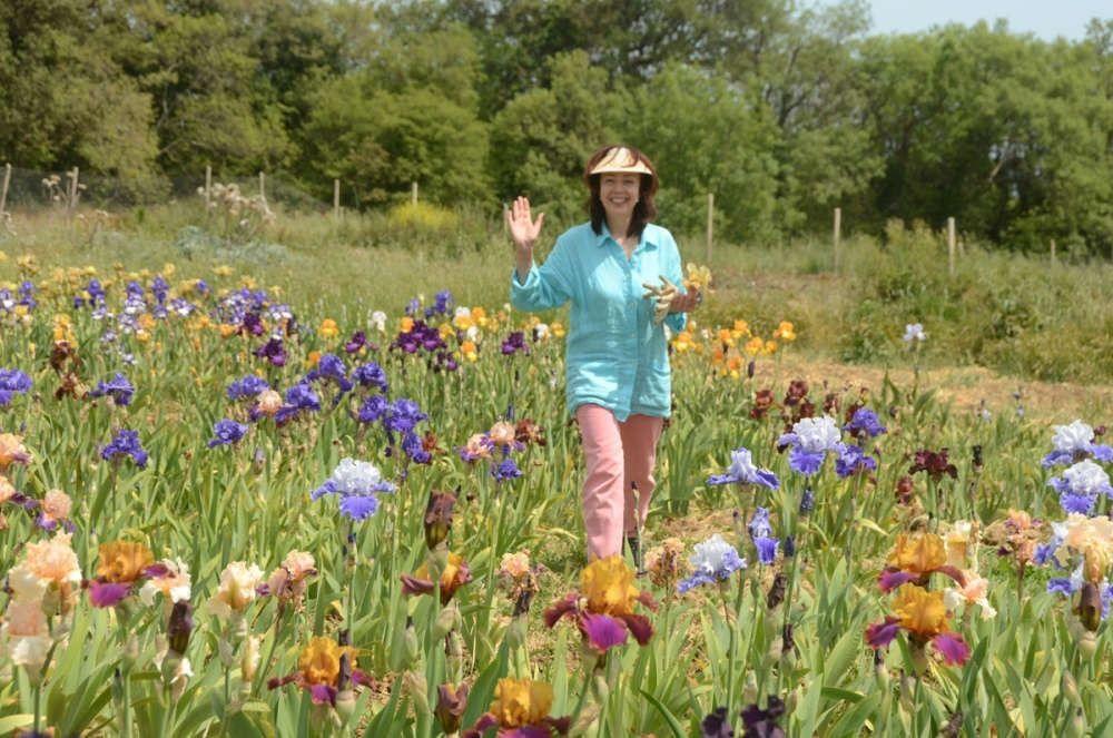 В Никитском ботаническом саду зацвели гибридные ирисы