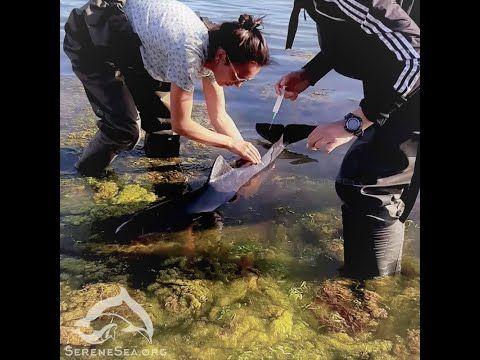 Изувеченный рыбаками дельфин попросил помощи у людей