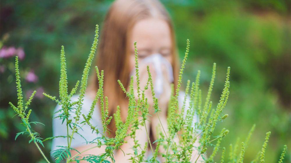 В Крыму от аллергии на сложноцветные травы страдают порядка 1500 человек