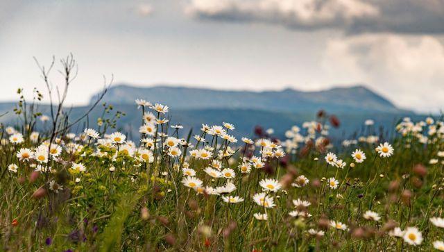 Бескрайние сочные просторы: Крым радует майскими полями - видео