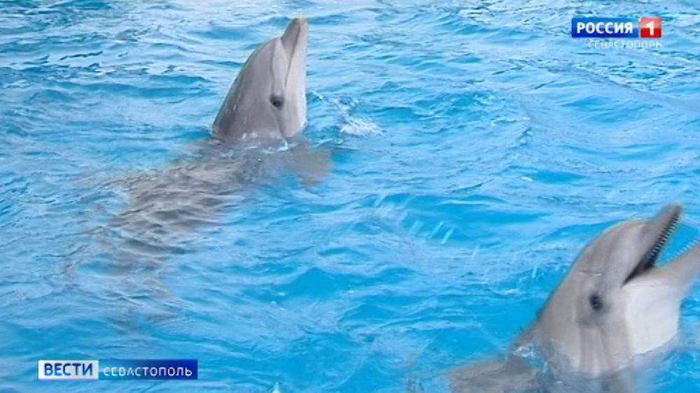 Как севастопольские ученые борются с гибелью дельфинов в Черном море