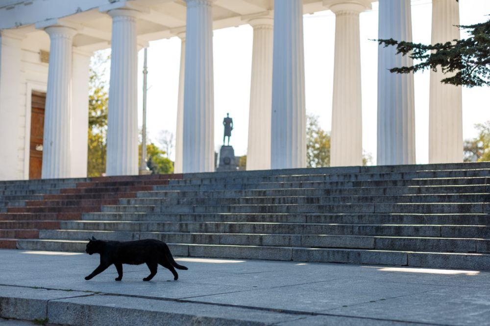 В Севастополе с 1 июня снимут часть «инфекционных» ограничений