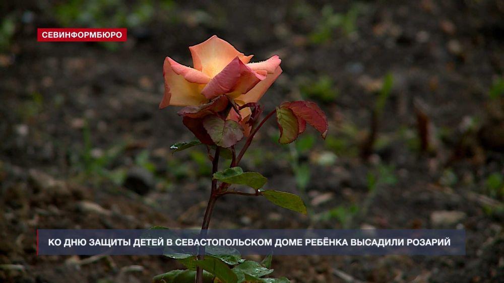 Ко Дню защиты детей в Севастопольском Доме ребёнка высадили розарий