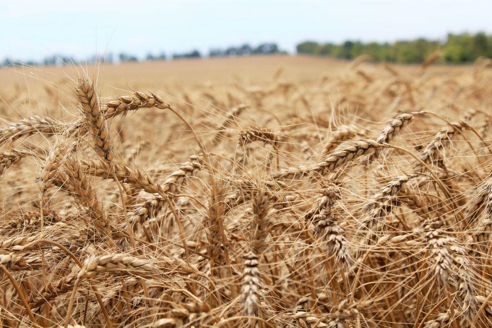 В Крыму повысилась урожайность, несмотря на дефицит воды
