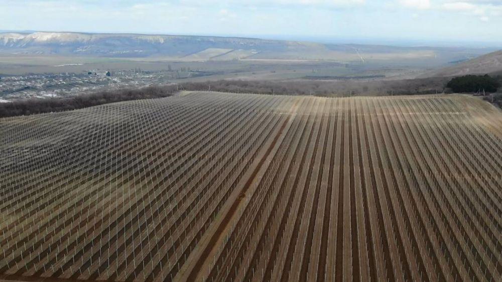 В селе Грушевка Судакского региона реализуется инвестпроект современного интенсивного яблоневого сада на 1,31 млрд рублей – Андрей Рюмшин
