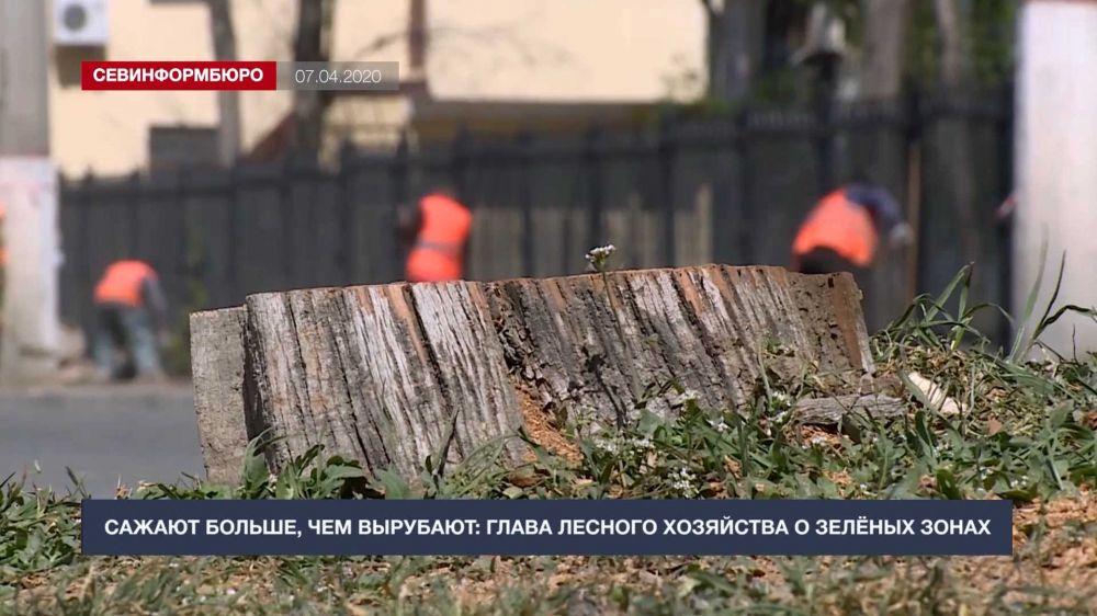 При ремонте дороги на улице Льва Толстого срубили 256 деревьев