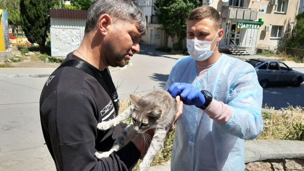 В Севастополе бесплатно прививают кошек и собак от бешенства