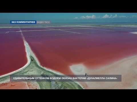 Розовое озеро Сасык-Сиваш в Крыму