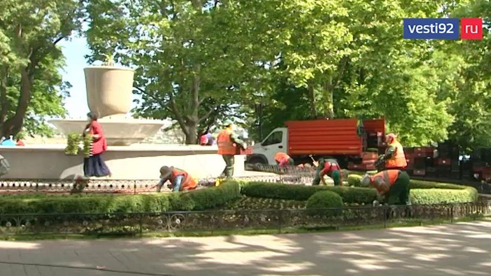 В Севастополе высадят 250 тысяч цветов