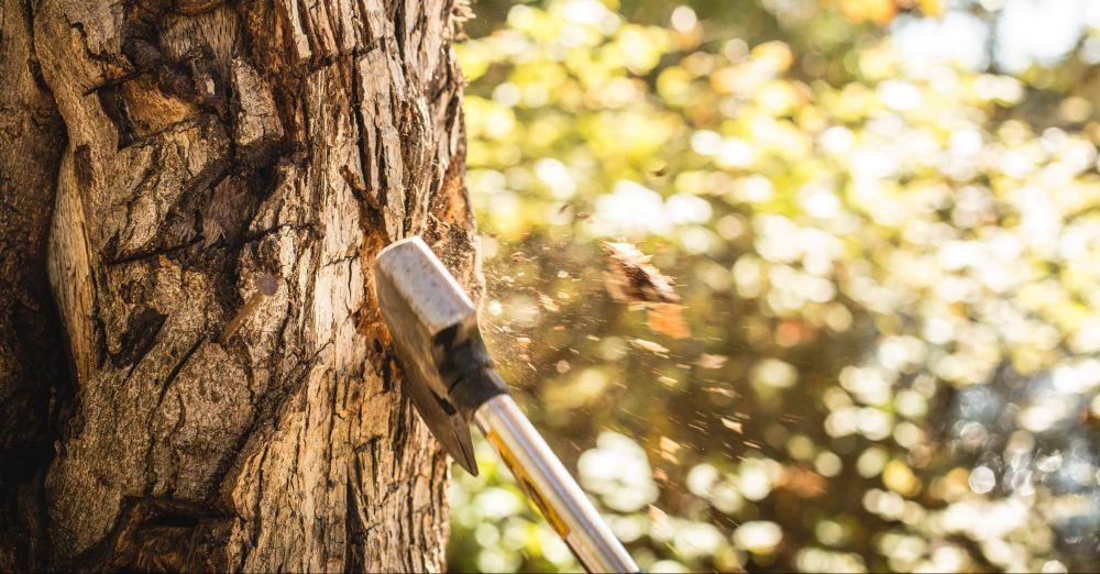 Нельзя! Севастополец рубил деревья — пошёл под суд