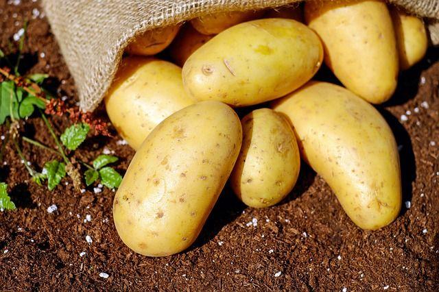 Роскачество предупредило о токсичных редьке и картофеле