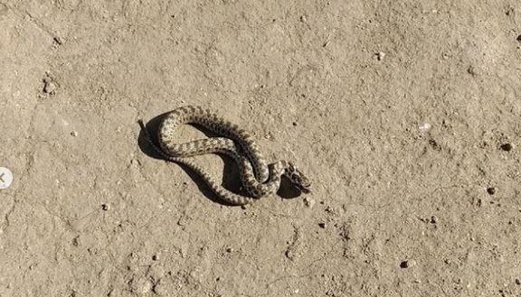 Змея жила у крымчанина в автомобиле