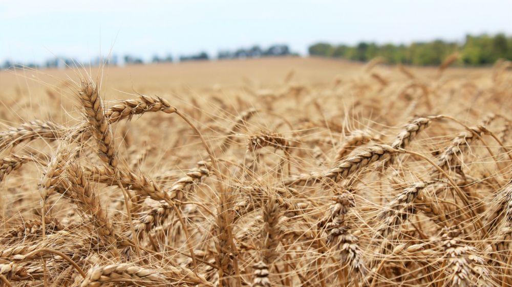 Минсельхоз Крыма заключил соглашения с 17 фермерами республики на получение средств грантовой поддержки – Андрей Рюмшин