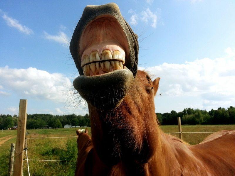 «Попал под лошадь». Странное ДТП в Севастополе