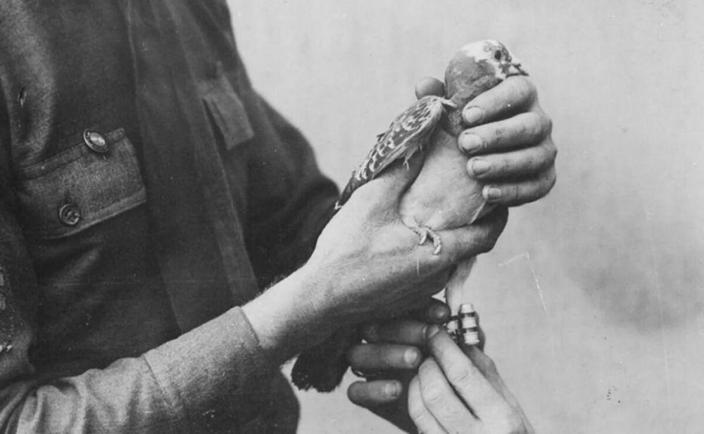В Севастополе сушу и море впервые связала голубиная почта