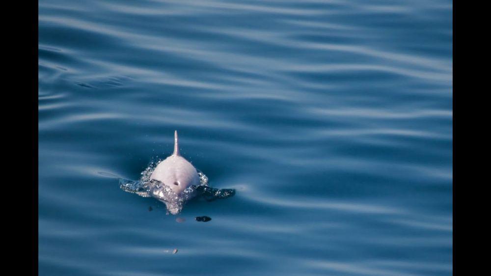 В Черном море обнаружили уникального дельфина