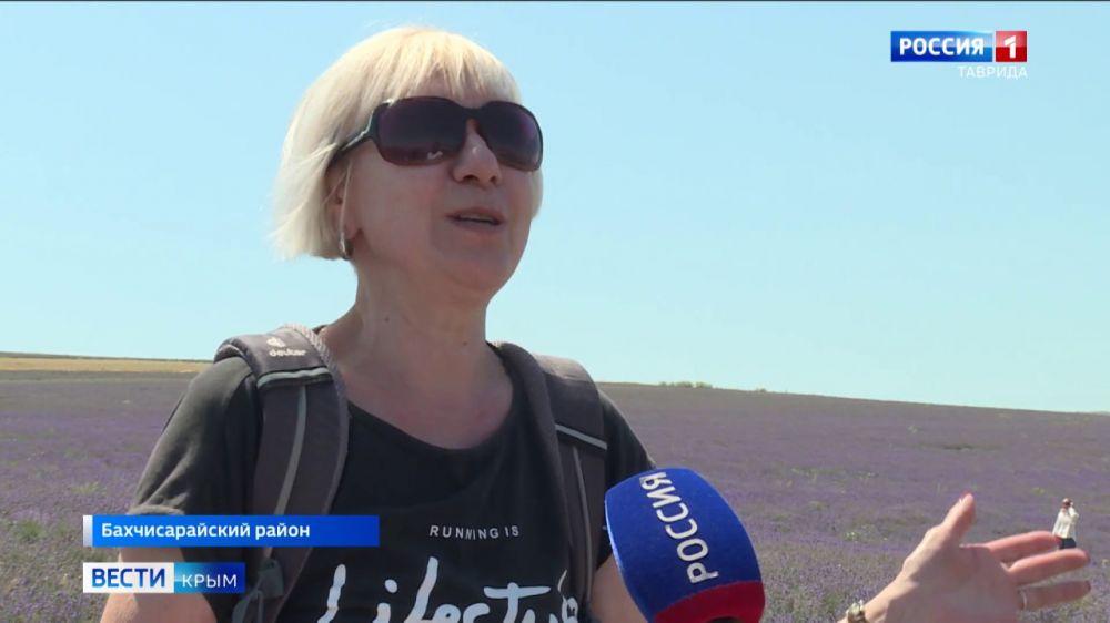 На лавандовом поле в Тургеневке начался сбор урожая