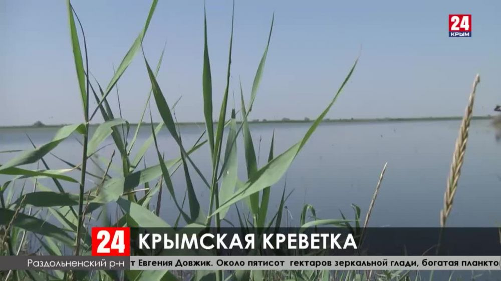 Четыре миллиона мальков вывели на креветочной ферме в Раздольненском районе